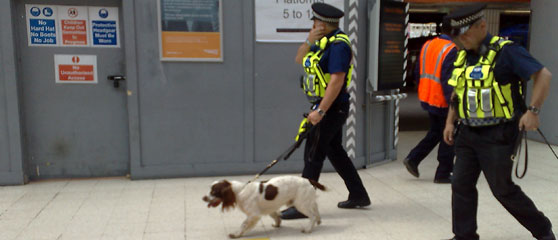 how to become a police dog trainer uk