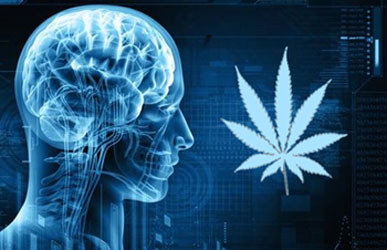 Image result for cannabis neurobiology